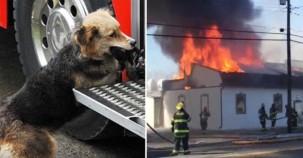 İtfaiyeciler Yangını Söndürmek Üzereyken Evin Köpeği Bakın Neyi Kurtarmaya Çalışıyordu