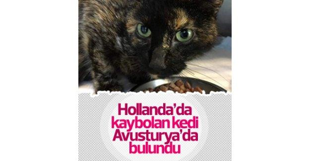 Hollanda'da kaybolan kedi Viyana'da bulundu