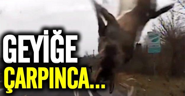 İsveç'te geyik arabaya çarptı