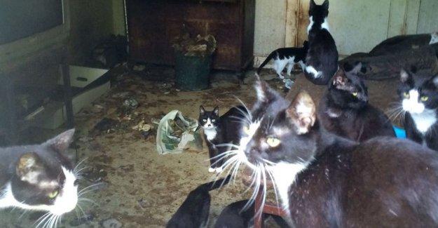 İsveç'te çevreye ağır koku saçan bir evde 29 kedi çıktı