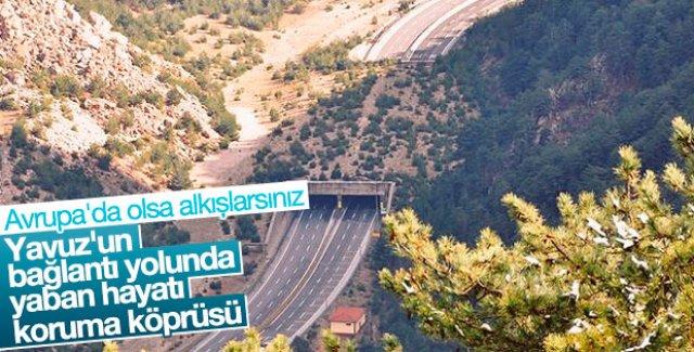 Yaban hayatı köprüsü tamamlanıyor