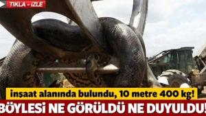 Herkes şok oldu! İnşaat alanında korkunç anakonda 10 metre ve 400 kilo!