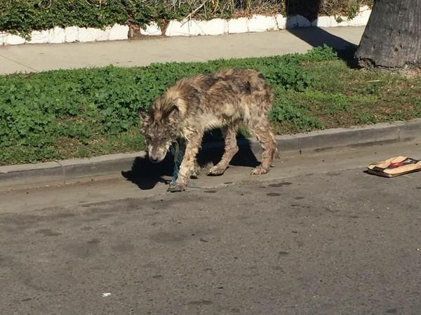 Hope For Paws ekibi, köpeğin fotoğrafının çekildiği bölgeye doğru hareket etti. Daha sonra Julia adı verilecek olan köpeği orada buldular.