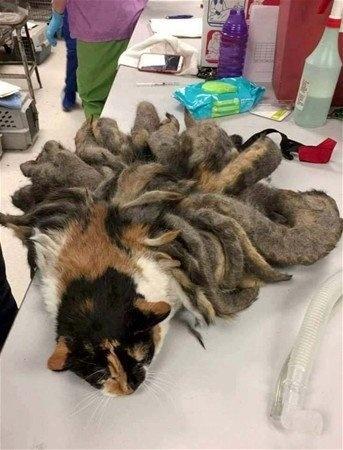 Sahibi huzurevine yerleşince ortadan kalan kedi bakımsızlıktan bu halde bulundu...