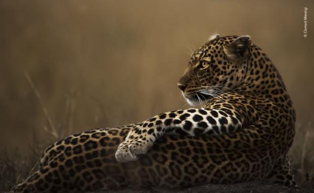 Kenyalı fotoğrafçı Clement Mwangi'nin What a poser isimli çalışması.