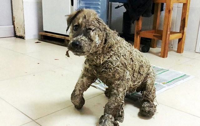 İstanbul'da henüz 4 aylık olan zavallı köpek Pascal çocuklar tarafından tutkal ve çamura bulandıktan sonra ölüme terkedilmişti.