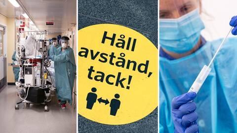 İsveç Halk Sağlığı Kurumu, web sitesinde güncellediği yeni verilere göre, son bir günde 178 kişi daha covid-19 kaynaklı olarak hayatını kaybettiği bildirildi.  Salgınla mücadele konusunda tedbirleri artırarak mücadele etmeye çalışan İsveç'te sürü bağışıklığının bedeli olarak görülen 11 bin 425 kişi hayatını kaybetti.