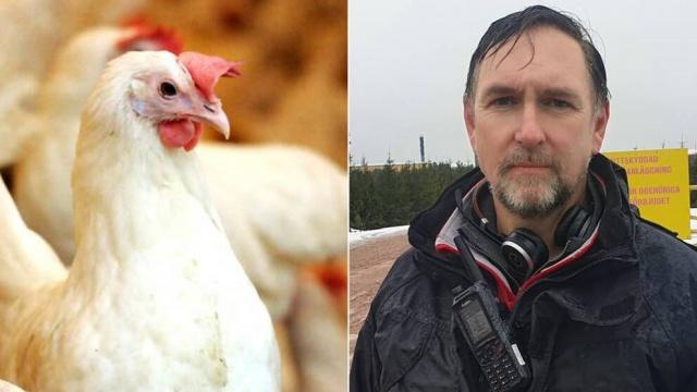 Mönsterås belediyesindeki bir çiftlikte kuş gribi tespit edilmesi üzerine yaklaşık yarım milyon tavuğun imha edilmesine karar verildi.   Yerel basında çıkan haberlere göre, İsveç Tarım Kurulu, Home Guard'dan yaklaşık 30 askeri yardım alıyor.