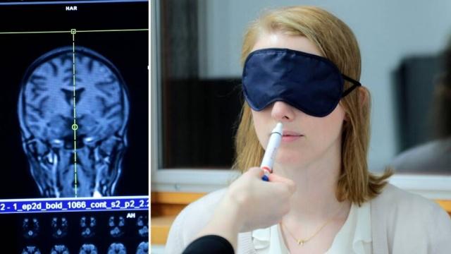 Araştırmacılar, covid-19 geçirenlerin yarısından fazlasının uzun süreli koku ve tat kaybı veya değişikliklerden muzdarip olmasından korkuyor.   Şimdi, beyin görüntüleri yardımıyla benzersiz bir çalışmada, Karolinska Institutet, virüsün koku alma duyusunu nasıl etkilediğinin gizemine cevaplar arayacak.