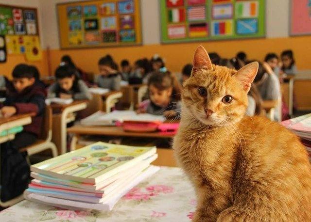Tombi, davranışları üzerinden değerlendirildiği karnesinde 'Pekiyi' notları ile dikkat çekti. Sevimli kedi okul kültürüne uyum, öz bakım, kendini tanıma, iletişim ve sosyal etkileşim, oyun ve fiziki etkinlikler, beslenme alışkanlığı, sosyal faaliyetlere katılım, takım çalışması ve sorumluluk, uyku düzeni ve çevreye duyarlılık derslerinden 5'er puan aldı.