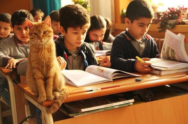 Sınıfın maskotu sevimli Tombi, daha sonra devreye İzmir İl Milli Eğitim Müdürü Ömer Yahşi'nin girmesiyle tekrar aynı sınıfta ders başı yaptı. Tombi'yi şikayet eden veli ise kendi isteğiyle çocuğunu başka bir sınıfa aldırdı.