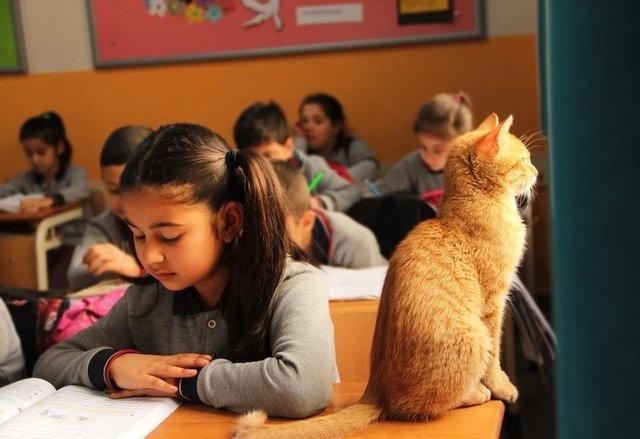 Bir süre öğrencilerle bir arada derslere katılan Tombi, bir öğrencinin velisi tarafından şikayet edilince okuldan uzaklaştırılmak zorunda kalmıştı.