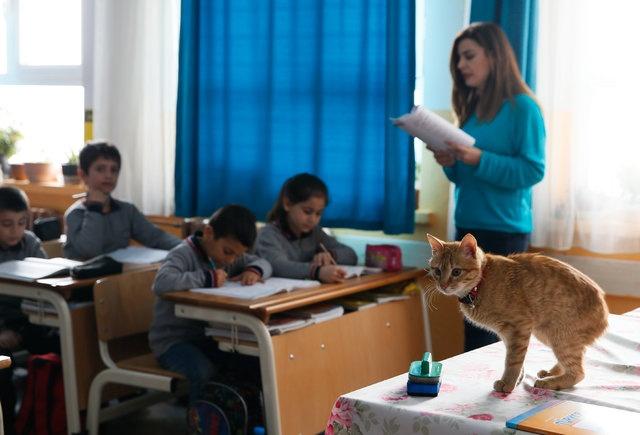 """Derya Pusa isimli veli de """"Oğlum kedileri çok seviyor. Oğlumun dersleri Tombi geldikten sonra daha güzel oldu. Okula çok daha mutlu gidiyor. Dilinden Tombi düşmüyor"""" dedi."""