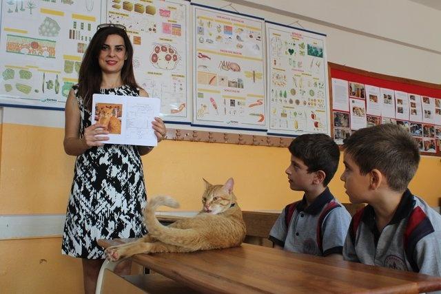 İzmir'in Bayraklı ilçesindeki Ticaret Borsası İlkokulu 3/C sınıfı öğrencilerinin sınıf arkadaşı Tombi isimli kedi için karne hazırlandı.