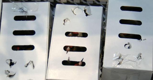 İstanbul Havalimanı'nda, valiz içinde saka kuşu kaçırmak isterken polis tarafından yakalanan Libya uyruklu yolcuya 95 bin lira (yaklaşık 160 bin kron) idari para cezası kesildi.