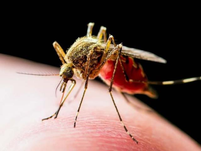 """Yaz döneminin gelmesi ve sineklerin daha fazla görülmesiyle birlikte merak edilen konulardan biri de Sinekler koronavirüs taşır mı?  Kırıkkale Üniversitesi Veterinerlik Fakültesi Dr. Öğretim Üyesi Aycan Gazyağcı, """"Mekanik olarak sineklerin virüsü taşıyabilme riski fazla. Bunların Covid-19 ile kontamine olmuş bir yerdeki temasından sonra sizin yediğiniz meyvenin üstüne konduğunda bulaştırma riski olabilecek canlılar olduğunu söyleyebiliriz"""" dedi."""