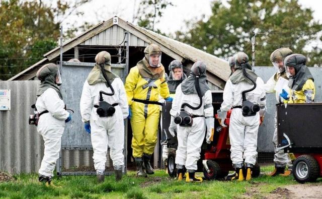 """Danimarka'da 17 milyon vizon için itlaf kararı alınmasına neden olan Cluster-5 virüsünün """"muhtemelen"""" öldüğü duyuruldu.  Danimarka Devlet Serum Enstitüsü, ülkedeki tüm vizonların itlafına neden olan, yeni tip corona virüsün (Covid-19) mutasyona uğramasıyla ortaya çıkan Cluster-5 virüsünün muhtemelen öldüğünü duyurdu."""