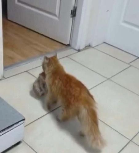 İzmir'in Karabağlar ilçesinde bir kedi, enfeksiyon kaptığı için gözleri açılmakta zorlanan yavrularını Karabağlar Belediyesi'nin Veteriner Sağlık İşleri Müdürlüğü'ne götürdü. Doktor ve hemşireler tarafından ilk müdahaleleri yapılan kediler, Veteriner İşleri Müdürlüğü'nde tedavi edildikten sonra sahiplendirildi.