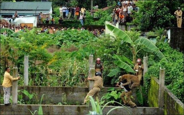 Daha sonra operasyon yapan polislere saldıran leopar vurularak durduruldu.