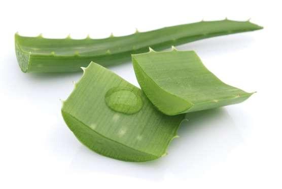 ALOE VERA  Aloe veranın iyileştirici gücünü hemen her sağlık sorununda görüyoruz. Aloe vera bitkisinin yaprağını kestikten sonra açığa çıkan jeli ayakkabının vurduğu yere uygulayabilirsiniz. Aloe vera anti enflamatuvar etki gösterir, kızarıklık ve şişkinliğe iyi gelir, yaranın hızlıca iyileşmesini sağlar ve cildi nemlendirir