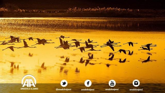 Kulu Belediye Başkanı Ahmet Yıldız, AA muhabirine yaptığı açıklamada, gölün 1992 yılında koruma altına alındığını söyledi.  Gölde 170'in üzerinde kuş türünün barındığına işaret eden Yıldız, baharın gelmesiyle burada 40 binden fazla kuşun kanat çırptığını dile getirdi.