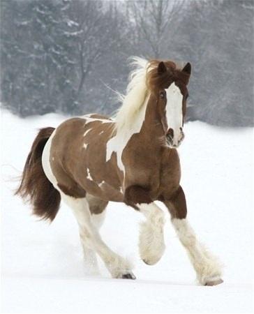 Tinker atı