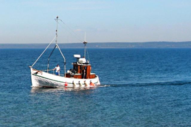 Gotland: Ringkorset