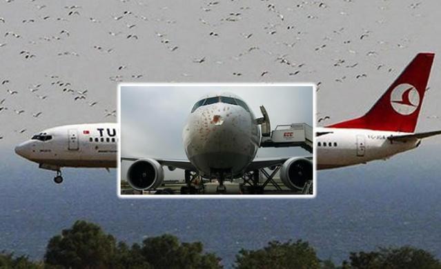 Türk Hava Yolları'nın İstanbul-Almatı seferini gerçekleştiren cargo uçağına kalkış sırasında kuş sürüsüne daldı. Uçağın gövdesi hasar aldı.