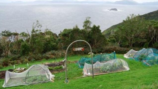 Bu yüzden bu adada kendi sebze ve meyvelerinizi yetiştirebileceğiniz alanlar var.