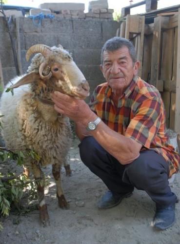 Burdur'un Menderes Mahallesi'nde yaşayan 68 yaşındaki emekli Ruhi Vurgun'un Kurban Bayramı için aldığı 4 boynuzlu kurbanlık görenleri şaşırttı.