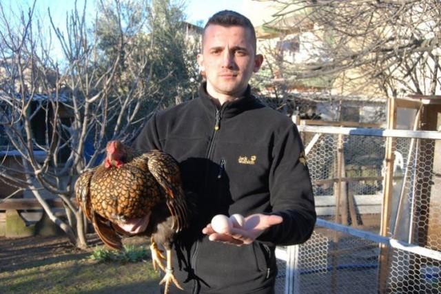 Çanakkale'nin Bayramiç ilçesinde hobi olarak süs tavuğu yetiştiriciliği yapan İsmail Arslan, GSG wyandotte cins tavuklarının tanesini İsveç Parasıyla 4500 krona satıyor. Tavukların yumurtaları ise 100 krondan satılıyor.