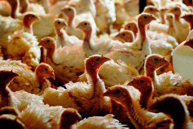 Skåne bölgesinde bir çiftlikte kuş gribi salgınının tespit edilmesinden sonra yaklaşık 18.000 tavuk katledildi.   Hastalığın diğer bölgelere sıçramaması için alarma geçildi ve 16 ekip yüksek güvenlik önlemleri için çalışmalara başladı. Bölgede kapsamlı tedbirlere devam ediliyor.