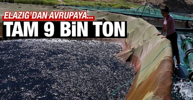 Elazığ'da Keban ve Karakaya baraj göllerinde üretilen 9 bin ton alabalık Avrupa'ya, 400 ton somon ise Japonya'ya satıldı.