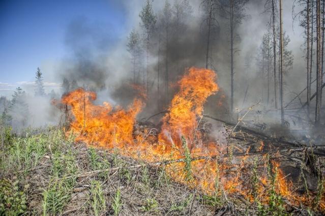 Edinilen bilgilere göre Västmanland bölgesinde çıkan orman yangını Sala bölgesine sıçradı. Sala'nın dışında büyüyen yangına çok sayıfa yangın söndürme ekibi müdahale ediyor.