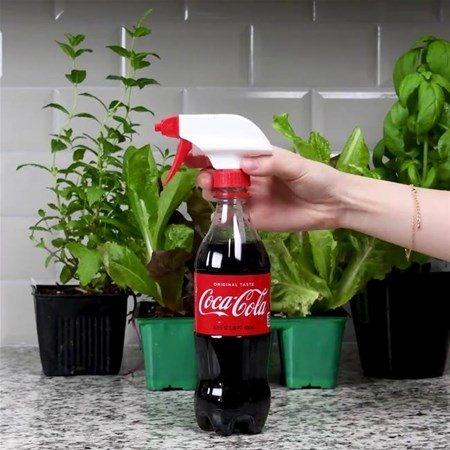 Bitkilerin diplerine sprey yardımıyla kola sıkın.