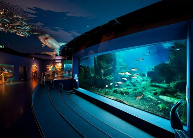 İstanbul Akvaryum  Dünyanın en büyük tematik akvaryumu olan İstanbul Akvaryum bünyesinde bulundurduğu canlılık çeşidi, temaları, yağmur ormanları ile kendi alanında dünyada ilkleri ve enleri olan bir akvaryum.  Ziyaretçilerini 16 farklı tema içerisinde Karadeniz'den Pasifik Okyanusu'na uzanan bir sırayla tüm İstanbul Akvaryumu görmeleri hedefleniyor. Temalar içerisinde her şey gerçeğe uygun olarak ve doğal şartlarda yaşatılmaya çalışılırken alanında uzman olan kocaman bir ekip bu doğal döngünün kusursuz işlemesini sağlamak.  Temalara özgü video ve oyunların yine tematik ışıklar efektlerle süslendiği İstanbul Akvaryum'da restoranlar, 5D sinemalar, cafeler ve birbirinden ilginç türlerin bulunduğu kara ve deniz canlıları ile ziyaretçilerini bekliyor.  İstanbul Akvaryum'da balık besleme saatlerinde uzmanların bu çok ilginç canlıları nasıl beslediğini ve bu canlıların doğal hayatta nasıl beklendiğini gözlemleyebilirsiniz. Bununla birlikte İstanbul Akvaryum'da Uzman dalgıçlar eşliğinde Köpek balıkları ile birlikte dev akvaryum içerisinde yüzebilme şansı da sizi bekliyor.  İstanbul Akvaryum içerisinde bulundurduğu 16 Tema dışında 1 de Amazon Yağmur Ormanı bulundururken ormanlardaki bitki çeşitliliği, oyunlar ve hediyelik eşyaların da satıldığı bölümden alınacak ilginç hediyeler sayesinde güzel vakit geçirmeniz mümkün.