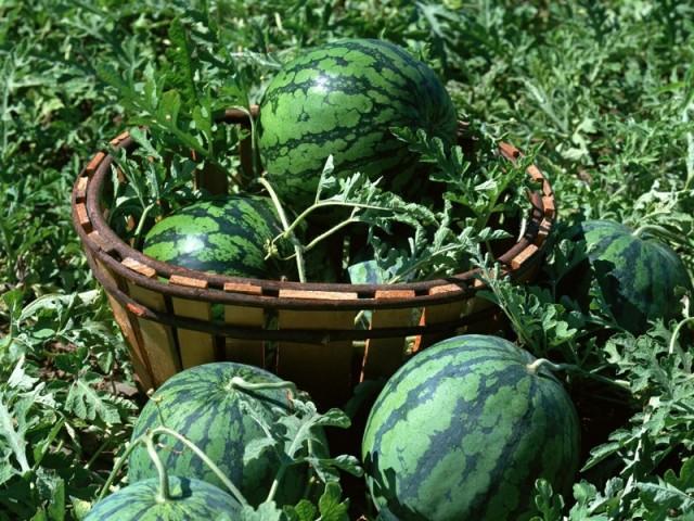 Diyetisyen Dilara Süngü Bulut, hayatımızın her döneminde önemli olan beslenme konusunda yaz döneminde dikkat edilmesi gereken hususları anlattı.