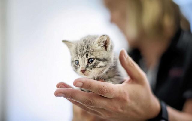 İsveç adeta boşaldı. Ancak tatile çıkan birçok sözde kedi sever kedilerine bakıcı bulamayınca ya da umursamayanlar kedilerini sokaklara saldı.