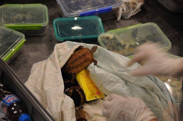 Hayvanlar gümrük görevlileri  tarafından Orman ve Su İşleri Bakanlığı yetkililerine teslim edildi.