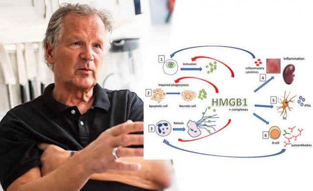 Şiddetli covid-19'da pulmoner inflamasyona agresif bir protein neden olabilir.  HMGB1 proteini vücudun bağışıklık sisteminin aşırı tepki vermesine neden olur. Ancak proteine saldıran antikorlar hayvan testlerinde zaten geliştirilmiştir.
