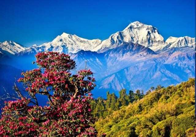 Nepal  Kapıda vize uygulaması var.  Nepal, sınır kapılarında ve havalimanlarında vize veriyor. Vize seçenekleri şu şekilde: 15 gün 25 ABD doları, 30 gün 40 ABD doları ve 90 günlük vize 100 ABD doları.  Nepal'de yıl boyunca en fazla 90 gün kalabiliyorsunuz.