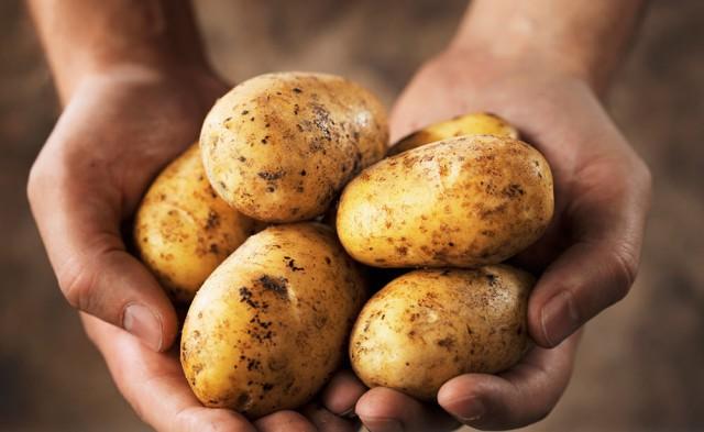 Patatesin de dahil olduğu tüm sebzeler vücudumuzun ihtiyacı olan temel vitamin ve mineralleri sağladığından beslenmemizde çok önemli rol oynarlar.