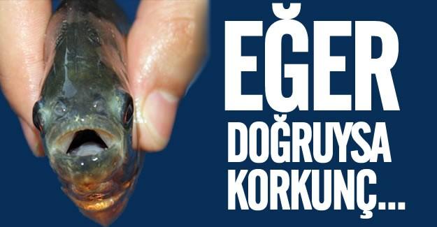 Türkiye'de Amasya ve arkasında Adana'da yırtıcı pirana balığının saldırısı korkuttu.