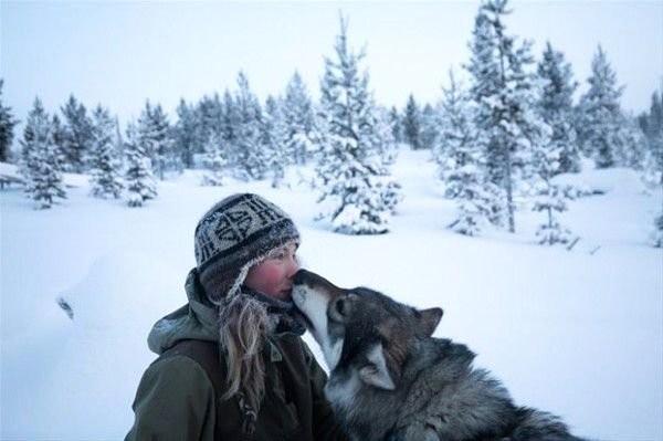 Tinja Finlandiya'da, en yakın köye 290 kilometre uzakta yaşıyor. Daha ilginci ise tam 85 kızak köpeğine bakıyor ve ülkenin kuş uçmaz kervan geçmez coğrafyasının tadını çıkarıyor.