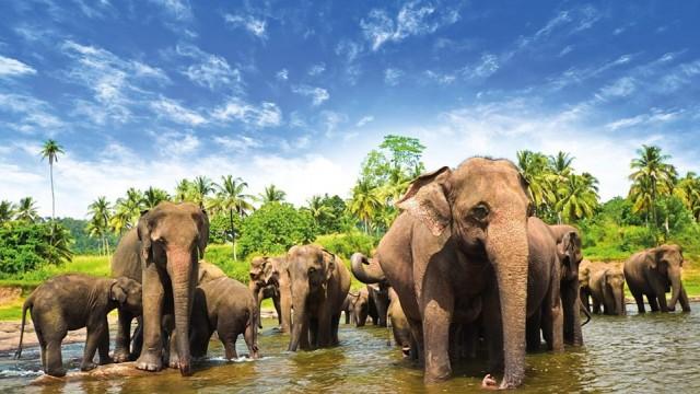 Sri Lanka  Online vize uygulaması var.   Sri Lanka E-vize sitesi üzerinden E-vize 30 günlük 35 ABD doları. Başvuru yapıldıktan sonra 24 saat içerisinde ülkeye giriş izni veren belgeniz size mail olarak gönderiliyor.