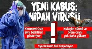 Nipah virüsü nedir, belirtileri neler?