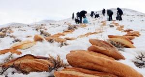 Yaban hayvanları için binlerce ekmek bıraktılar