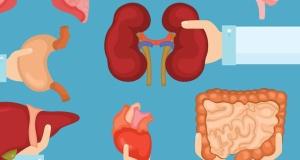 Hükümet organ bağışı ile ilgili yasa teklifini geri çekti