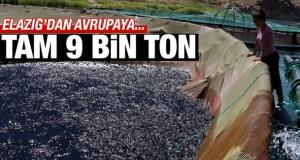 Elazığ'dan Avrupaya 9 bin tonluk ihracat