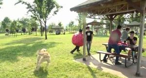 Koronavirüs kılığına giren tiyatrocu köpeğin saldırısına uğradı